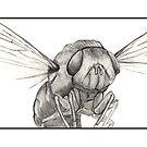 Dermatobia hominis: Adult by skeletalbird