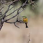 Swallow-tailed Bee Eater by Marylou Badeaux