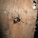 Black Widow by BLAMB