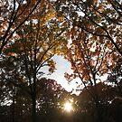 Autumn by BLAMB