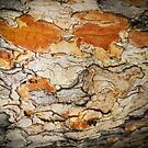Jigsaw Craquelure - Abstract from Nature by Marilyn Harris
