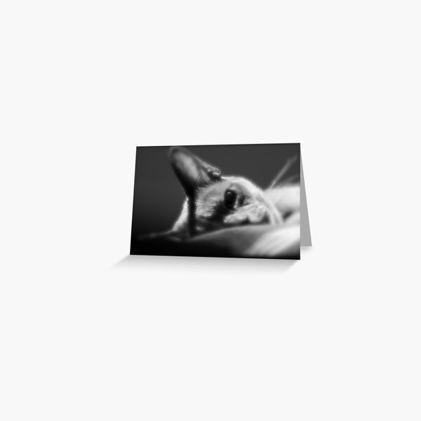 Delilah, two year old Burmese, is Puzzled. Greeting Card