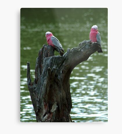 On the Campaspe River Metal Print