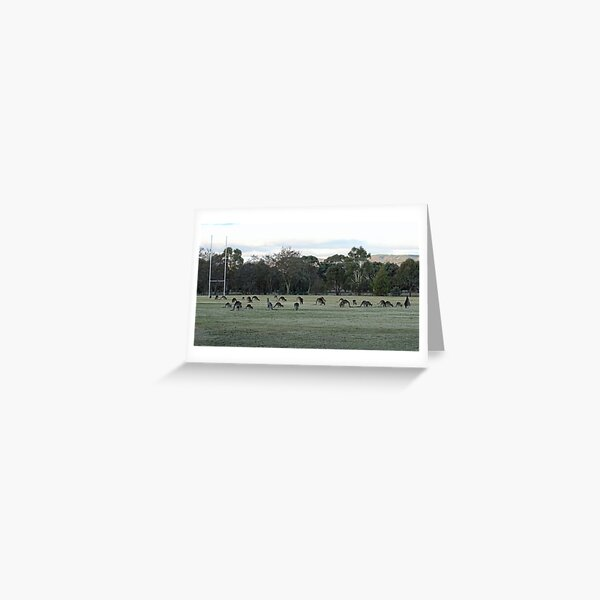 Our paddock now Greeting Card