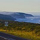 Morning Mist by Matthew Ryan