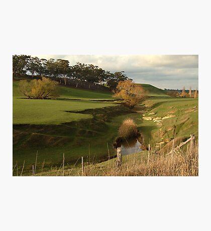 Green Pasture,Daylesford District Photographic Print