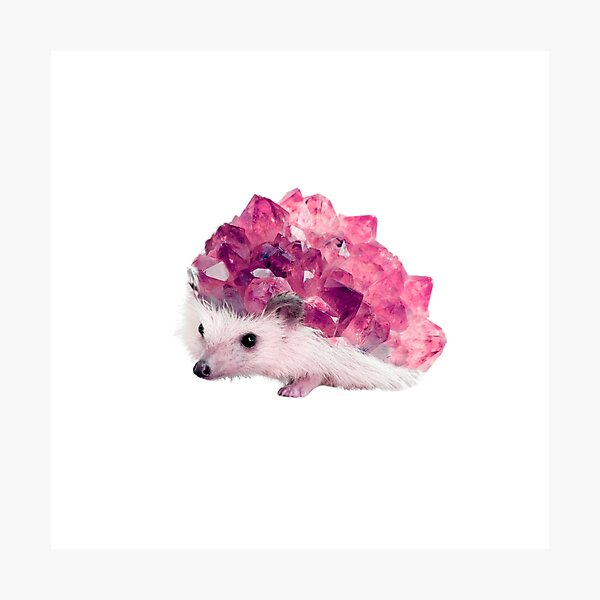 Lucky Mineral hedgehog by Alice Monber Photographic Print