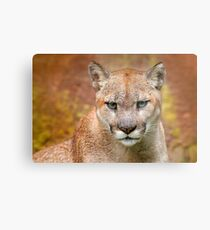 Cougar Predator T-Shirt, lion and Puma T-shirt, Cougar Sticker predator. Metal Print
