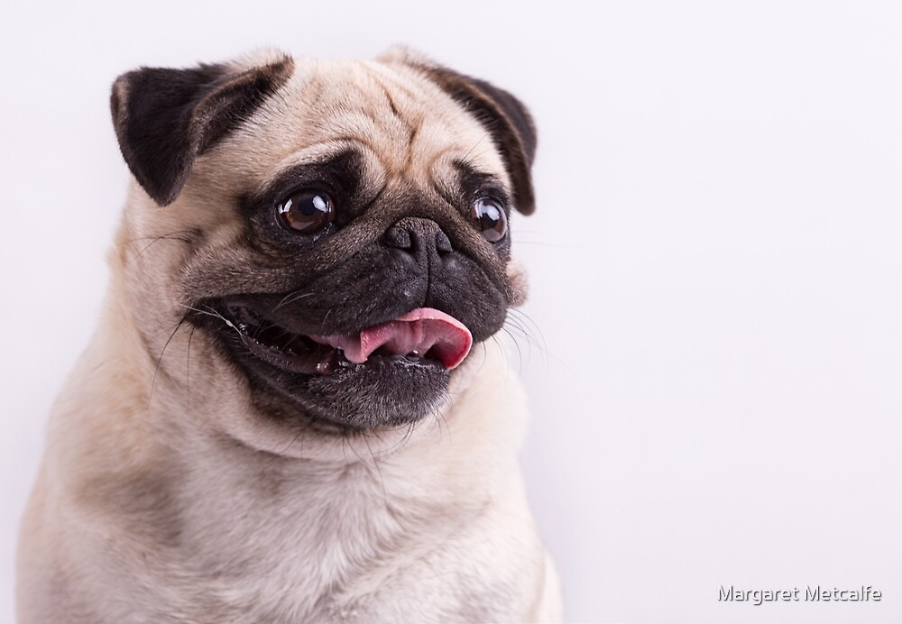 Pug Face by Margaret Metcalfe