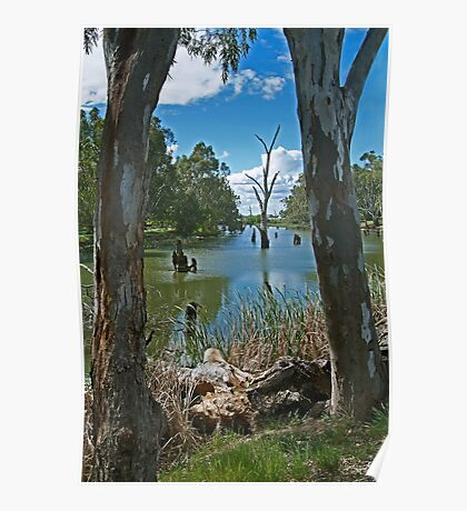 Campaspe River,Elmore Poster