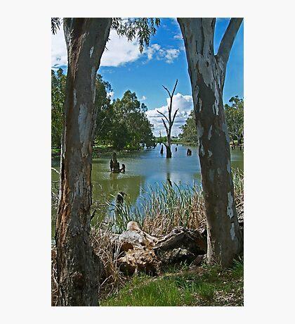 Campaspe River,Elmore Photographic Print