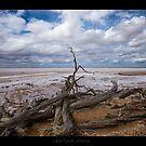 Lake Tyrrell, Victoria by mspfoto