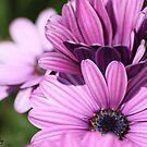 Purple Beauty by Pinkanna1980