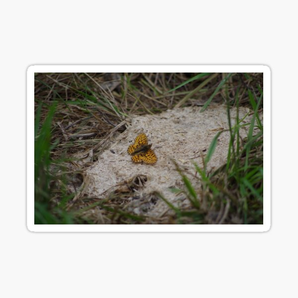 Fritillary Butterfly Sticker