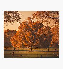 Fall Tree Photographic Print