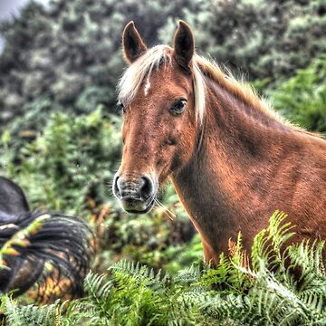 Flaxen-maned New Forest Pony of Hampshire, England by RavenPrints