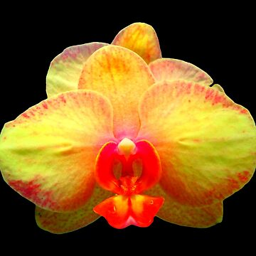 beautiful, yellow orchid, phalaenopsis, flower, blossom by rhnaturestyles