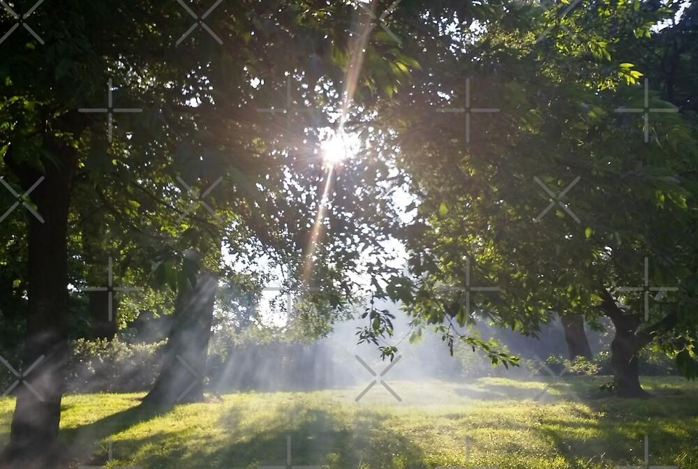 Smoky Tree Sun Rays - Landscape Shot by Naean Howlett-Foster