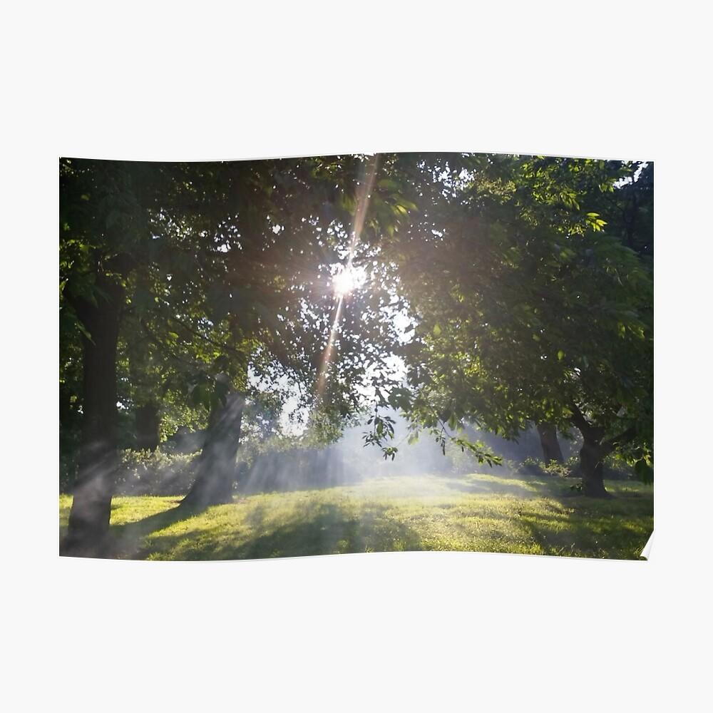 Merch #11 -- Smoky Tree Sun Rays - Landscape Shot Poster