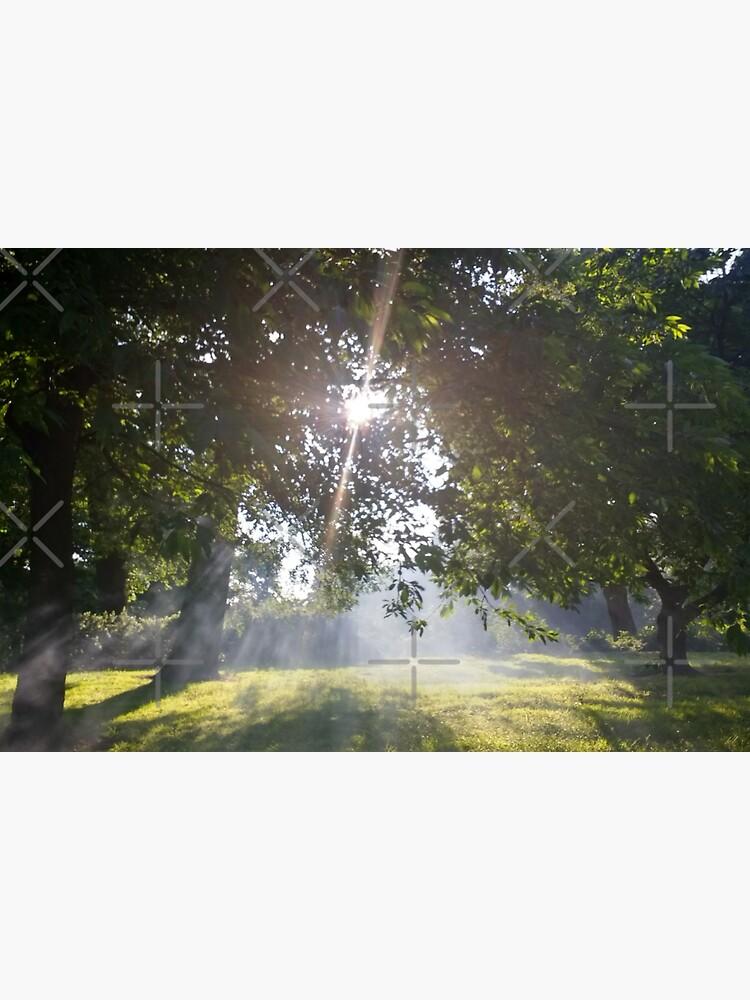 M.I. #11  ☼  Smoky Tree Sun Rays - Landscape Shot (Pearson Park) by Naean