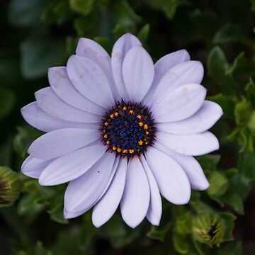 Beautiful flowers by sunilbhar