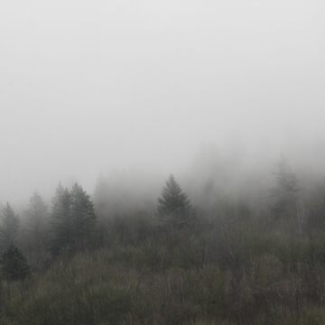 Trees and Fog3 by couragesings