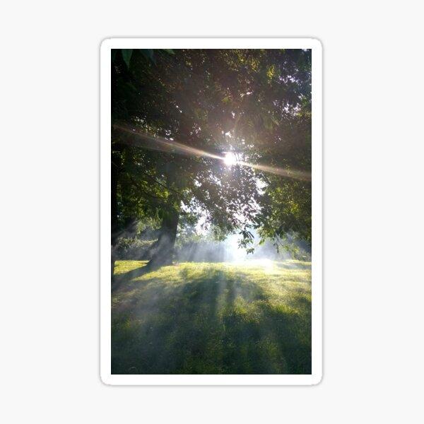 M.I. #12 |☼| Smoky Tree Sun Rays - Portrait Shot (Pearson Park) Sticker