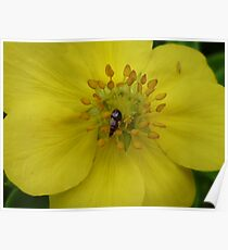Bug on Yellow Flower Poster