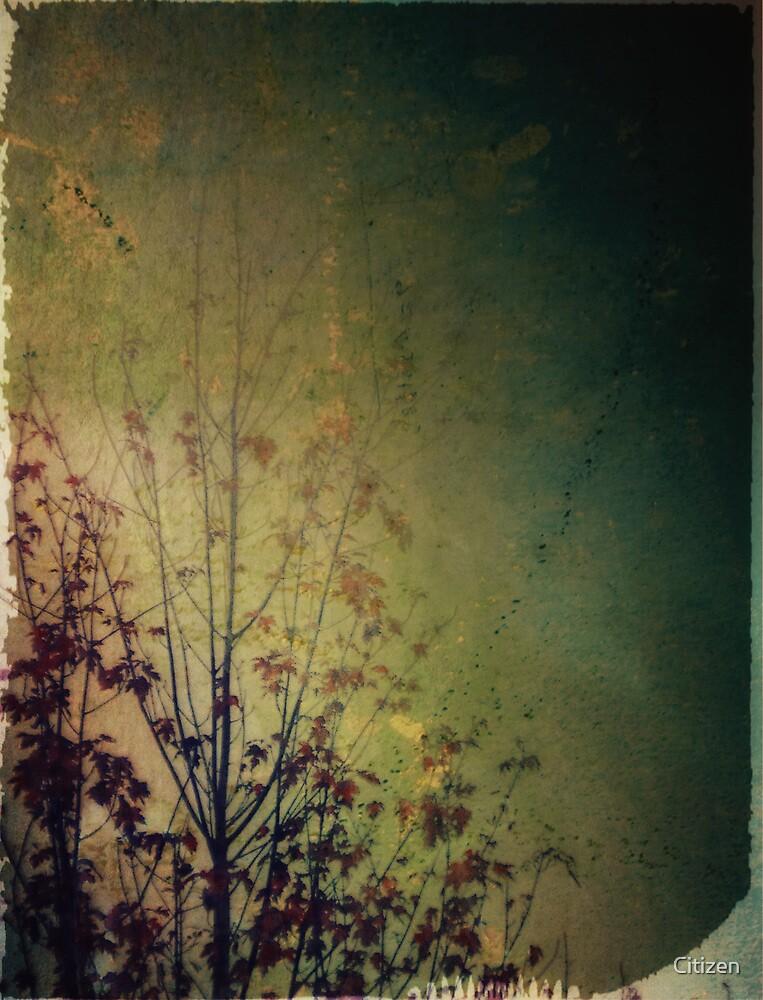 Lingering reverie by Nikki Smith (Brown)