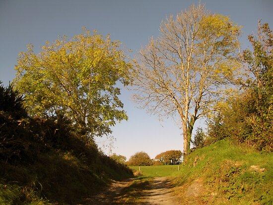Rural Irish country path by John Quinn