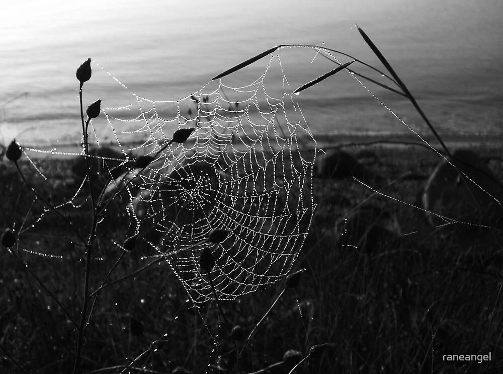 Catching Dawn.. by raneangel