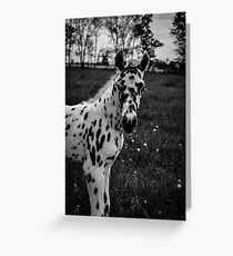 Leopard Appaloosa Foal  Greeting Card