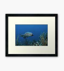 Reef Cruiser Framed Print