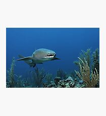 Reef Cruiser Photographic Print