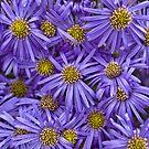 Purple Explosion by Lynne Morris