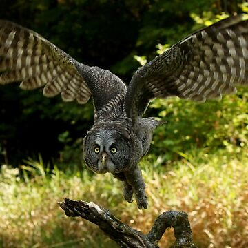 Flight of the Goddess by locustgirl
