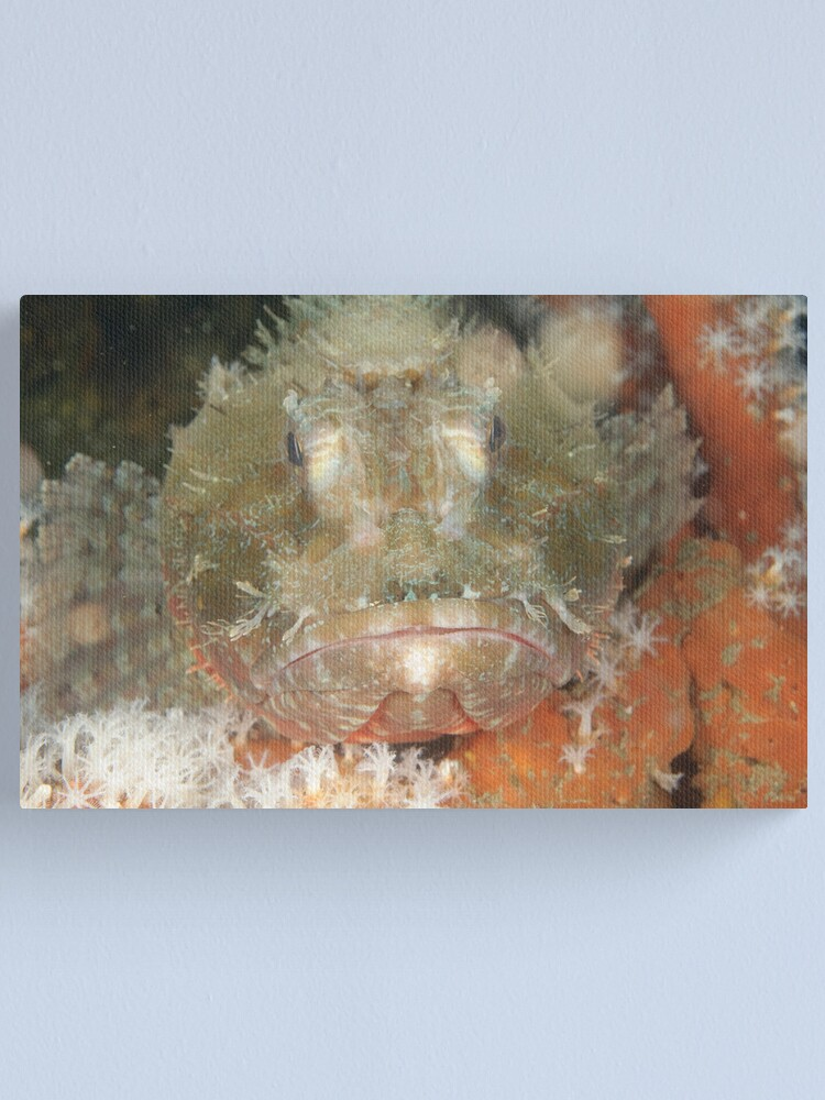Alternate view of Red Rock Cod Canvas Print