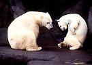 Polar bears by Larry  Grayam