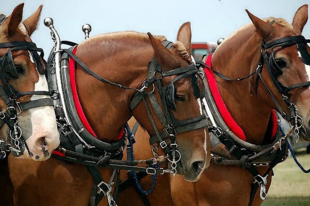 Belgian Draft Horse Group Portrait by Oldetimemercan