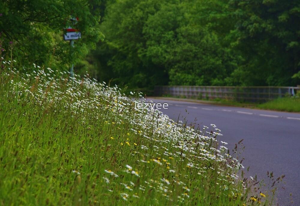 Roadside flowers (Leucanthemum vulgare) by lezvee