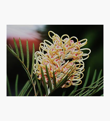 loopy Photographic Print