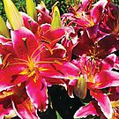 Asiatic Lily by Jerald Simon (Music Motivation - musicmotivation.com) by jeraldsimon