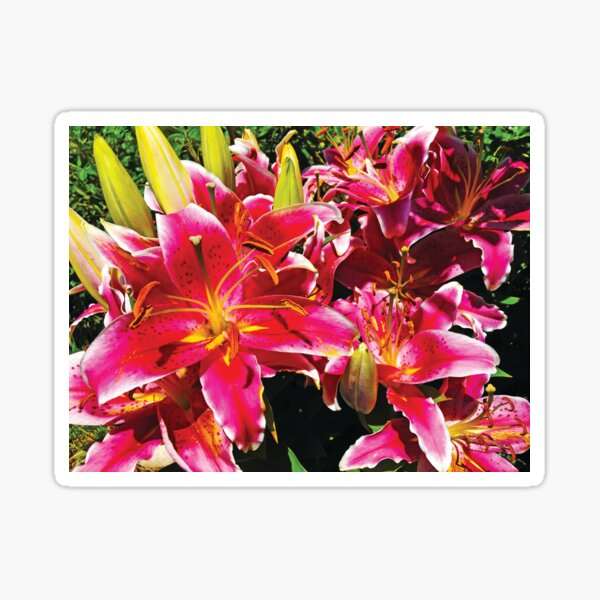 Asiatic Lily by Jerald Simon (Music Motivation - musicmotivation.com) Sticker