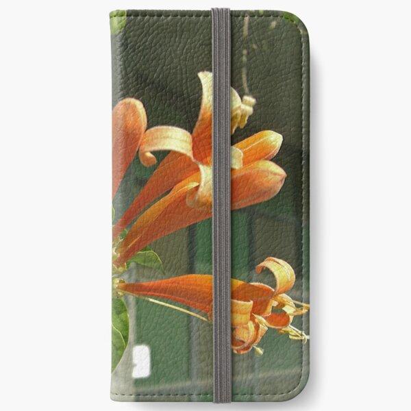 Pyrostegia venusta or Flame vine 1 iPhone Wallet