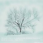 Breath Of Winter by AngieDavies