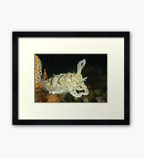 Mourning Cuttlefish - Sepia plangon Framed Print