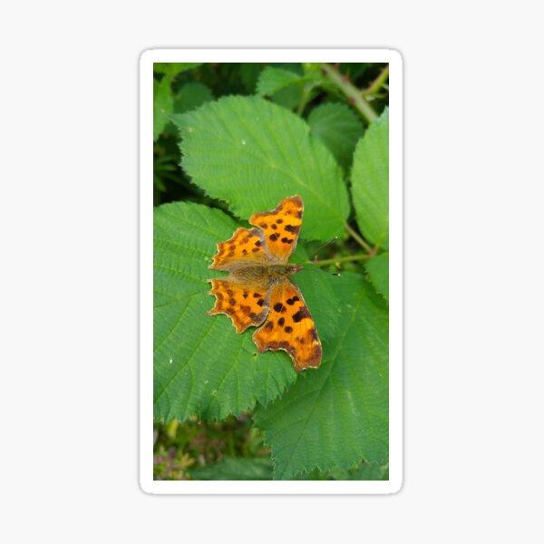 Comma Butterfly Sticker
