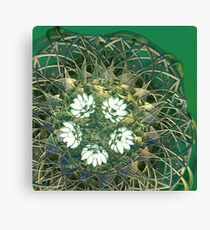 Edelweiss Canvas Print