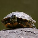 sunning turtle by wilderpisces