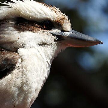 Kookaburra by kirstybush